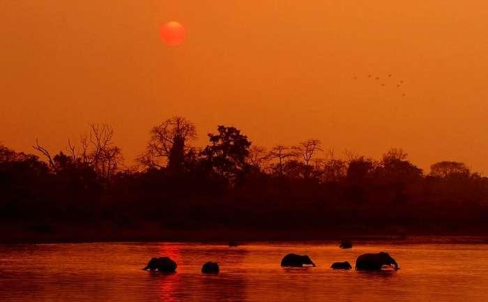 Asiatic elephants of Assam