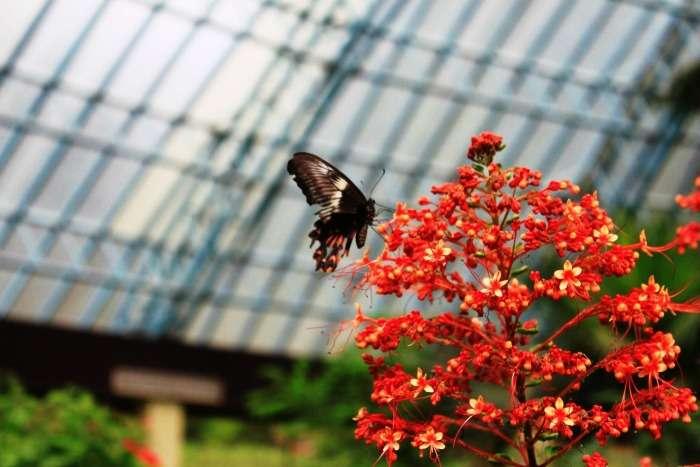 Visit a butterfly park in Bannerghatta Biological Park, Karnataka