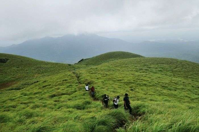Group of Friends Trekking uphill Chembra Peak