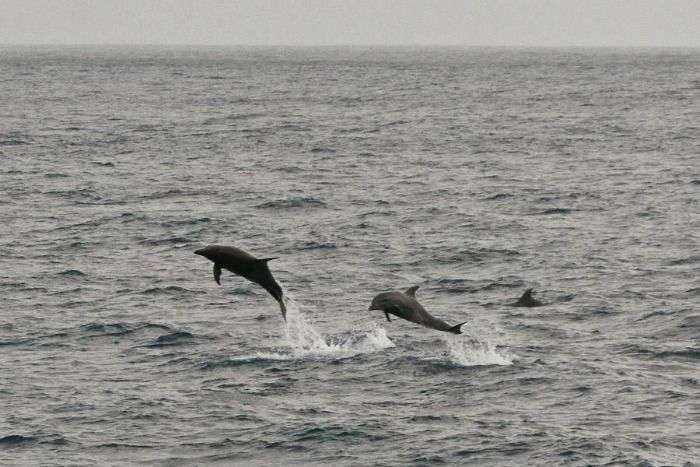View of dolphins from Payyambalam beach