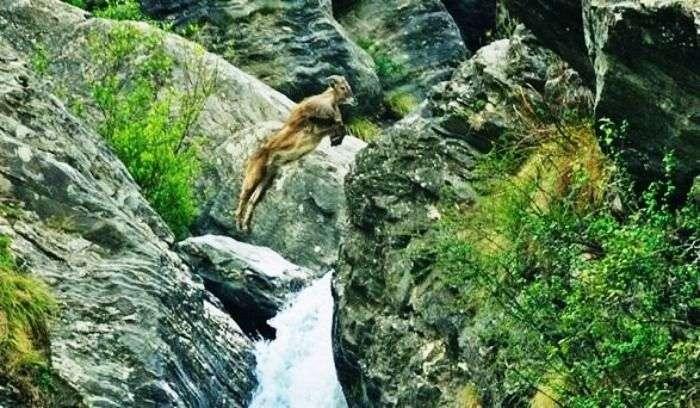 Amazing wildlife at The Great Himalayan National Park, Himachal Pradesh