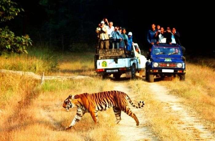 Capture wildlife on jeep safari at Jim Corbett National Park, Uttarakhand