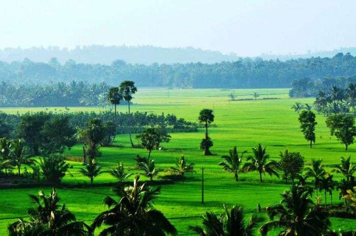The jade green fields of Kerala Villages