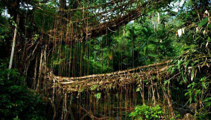 Root bridges_23rd oct