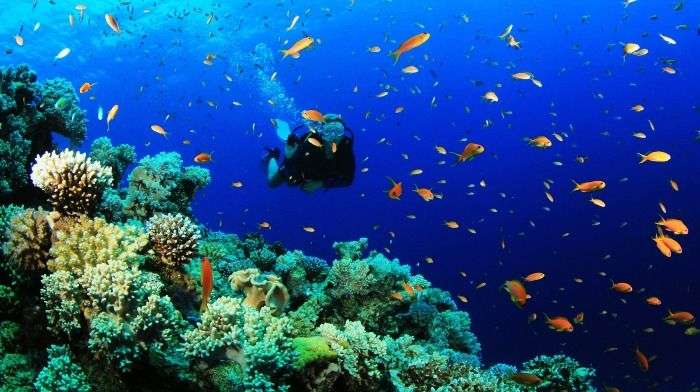 Scuba Diving in Andaman for an adventurous holiday