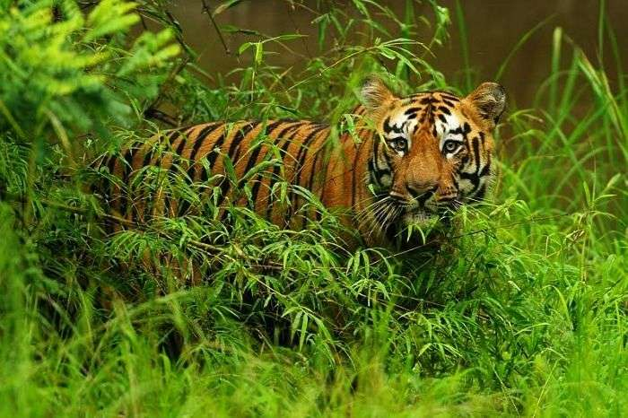 Tadoba - one of the largest national parks in Maharashtra