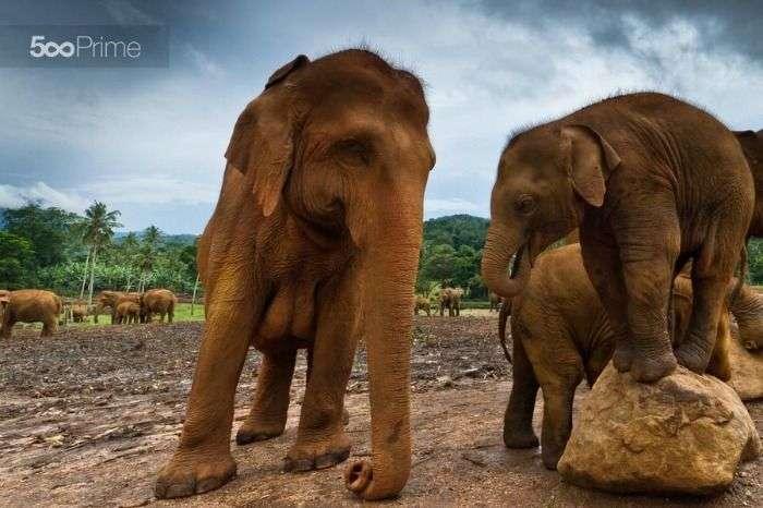 Capture baby elephants at Udawalawe National Park
