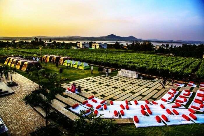 Camping in the vineyards of Nashik