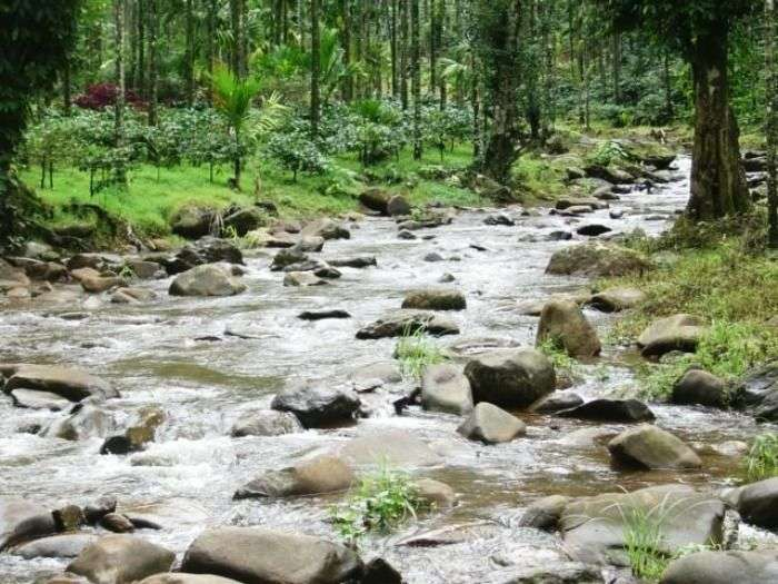 A brook flowing through the valleys of Chikmagalur