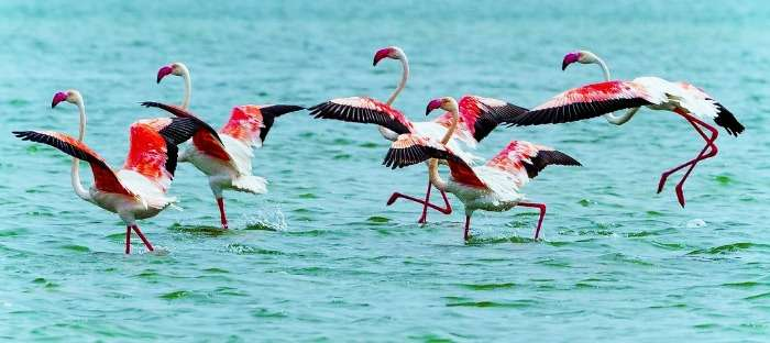Migratory birds in Chilka Lake in Odisha