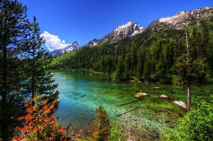 The scenic views of Jenny Lake