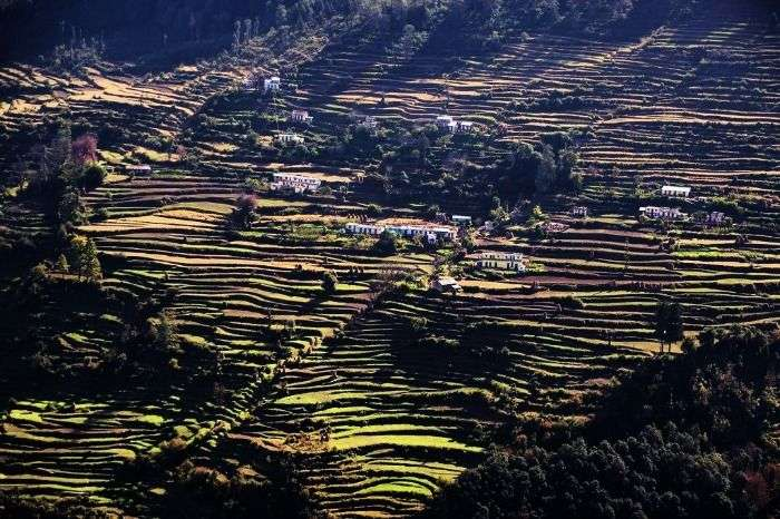The verdant valley of Munsiyari adorned with terrace cultivation