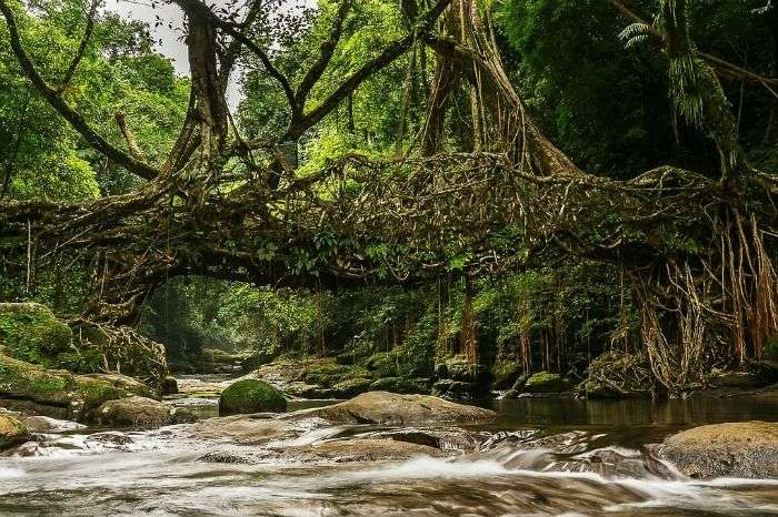 the famous living root bridge of Mawlynnong