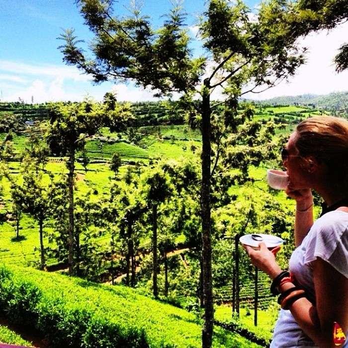 Sri lankan tea gardens
