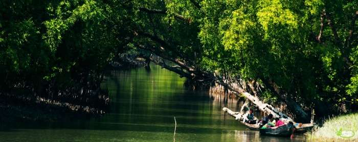 The mangrove forest of Sunderbans