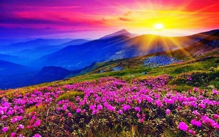 Vivid flower display in Valley of flowers in Uttarakhand