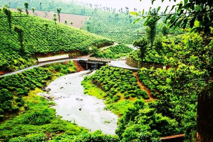 The gorgeous valley of Valparai, Tamil Nadu