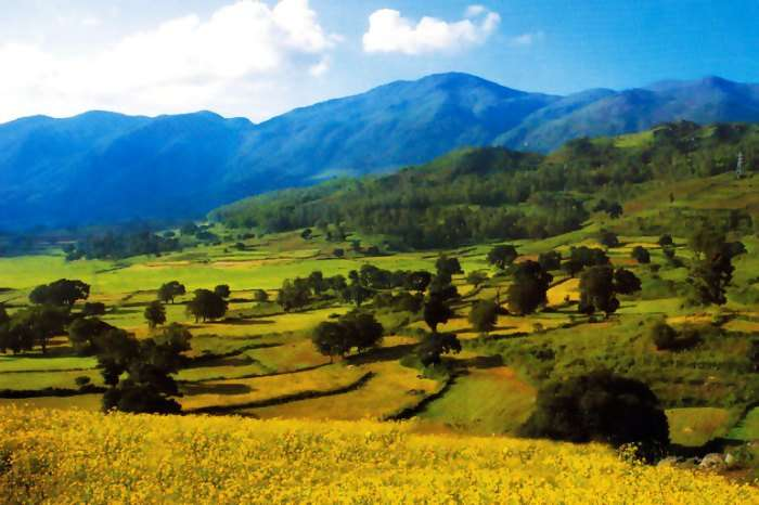 Araku Valley is covered with lots of greenery, exotic view of the hills, streams and rivulets