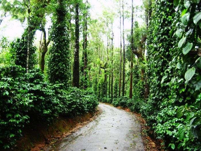 Coorg is amongst the best places to visit in India