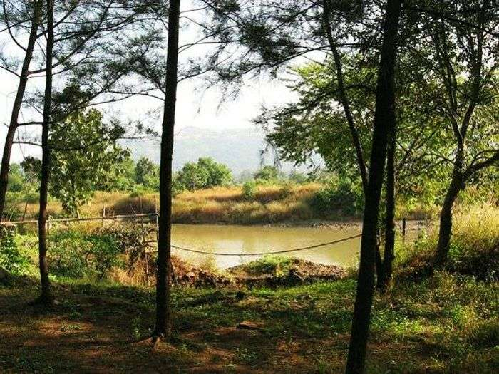 Durshet is a forest with mango,teak trees and mahua.