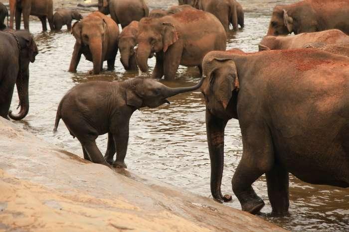 Elephant orphanage in Sri Lanka