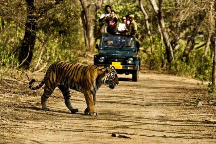Explore the Jim Corbett National Park
