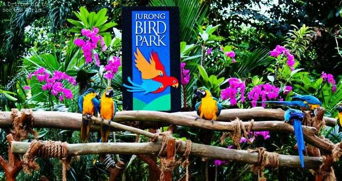 Explore the thriving ecosystem of Jurong Bird Park