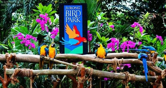 Jurong-Bird-Park_19th oct
