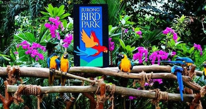 Jurong-Bird-Park_19th oct