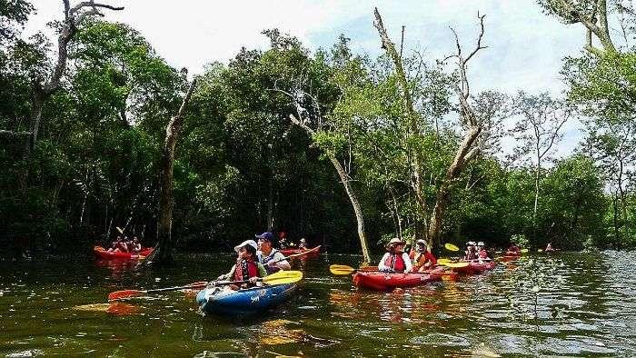 Kayak through Mandai Mangroves
