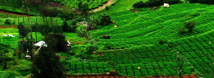 The beautiful hill station is located in the Nilgiris Hills