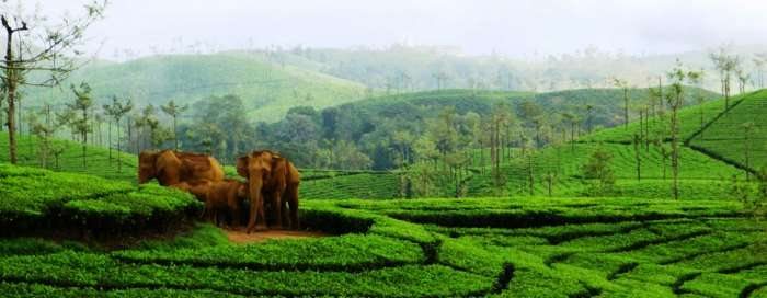 Meghamalai is one of the best hill stations in India in summer
