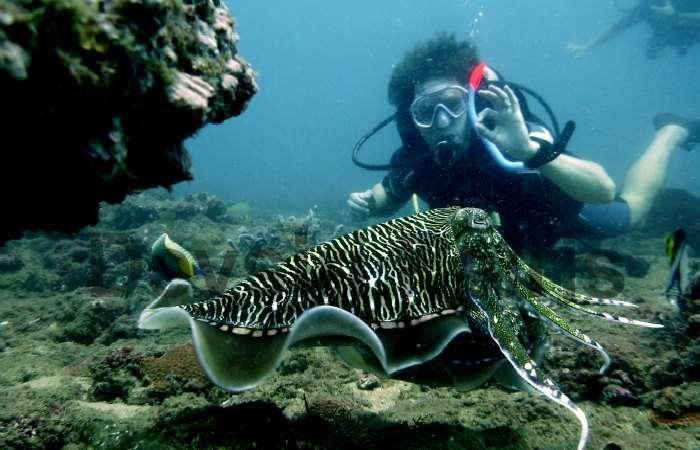Scuba Diving in Sri Lanka