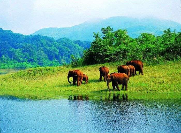 Thekkady offers lovely roads in the countryside, thick jungles and rich plantations.