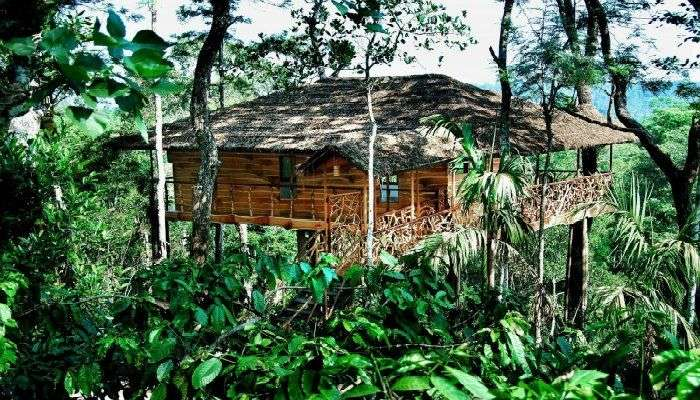 This treehouse is perched on a single tree located just next to Periyar Wildlife Park