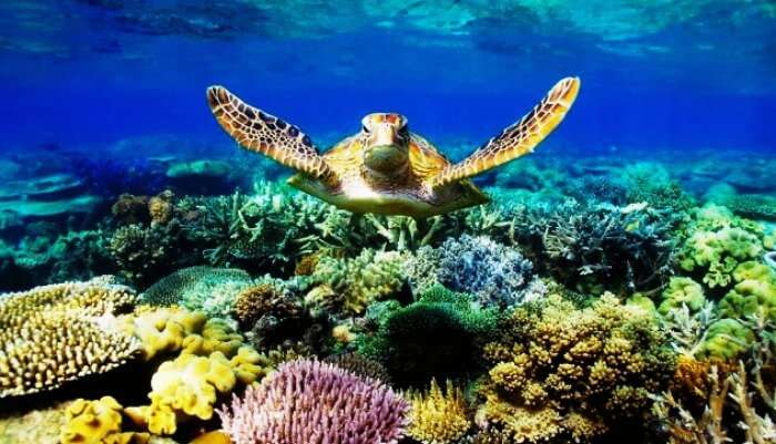 A giant sea turtle in the Great Barrier Reef