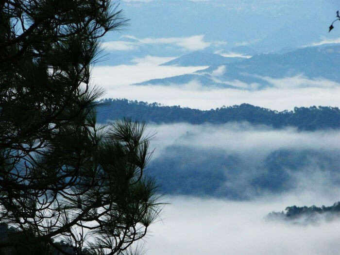 The misty hills of Kasauli make for a perfect honeymoon destination in Himachal Pradesh