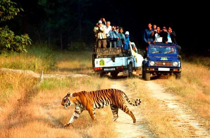 Jeep safari in Jim Corbett is one of the most popular tourist attractions in Uttarakhand
