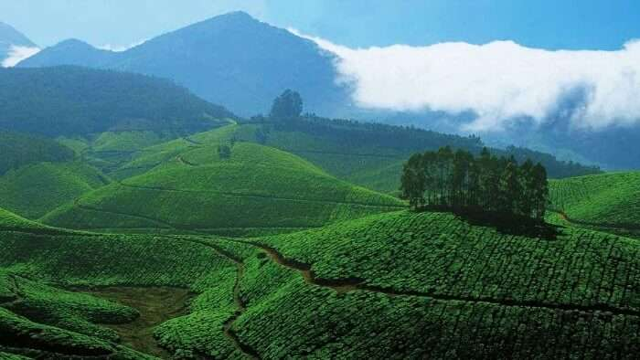 Munnar is amongst the most scenic monsoon tourist places in Kerala