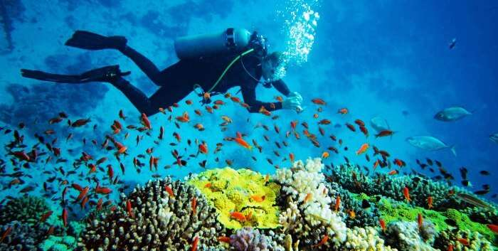 Andaman islands in India are amongst the best places in the world to scuba dive
