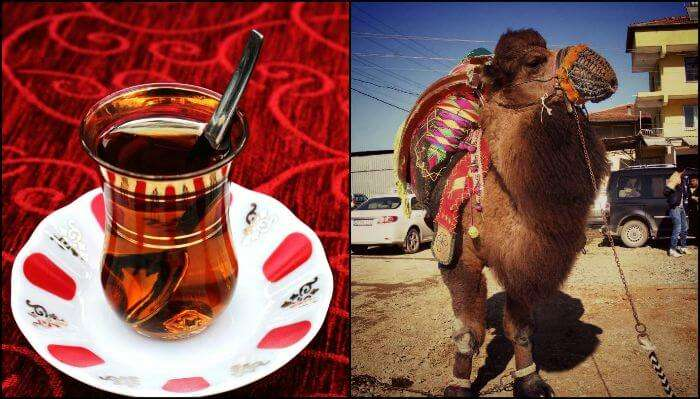 Apple tea and camel in Turkey
