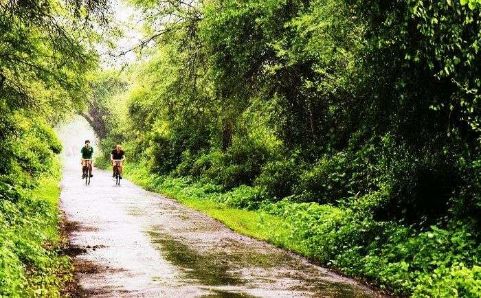 Bicycle ride in Bharatpur bird snctuary