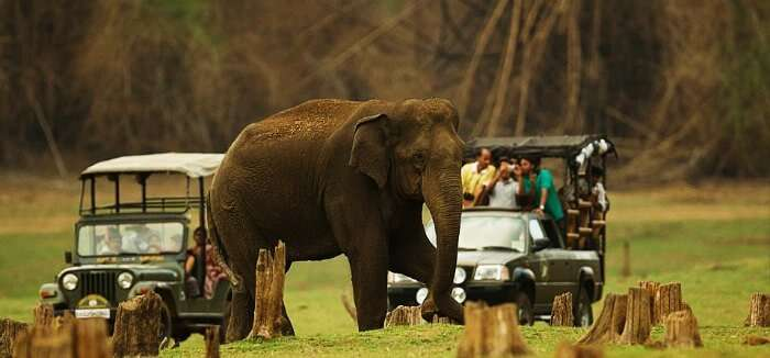 Elephant in Kabini Wild Sanctuary