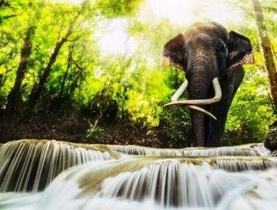 An elephant by the Erawan National park