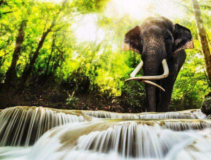 An elephant by the Erawan National park