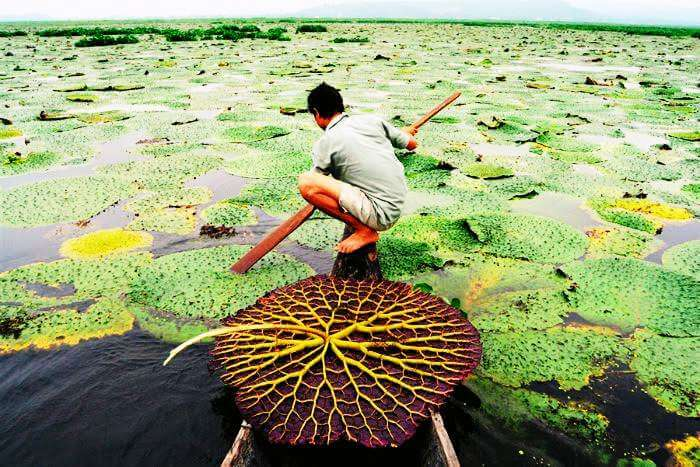 The floating Loktak lake in Manipur