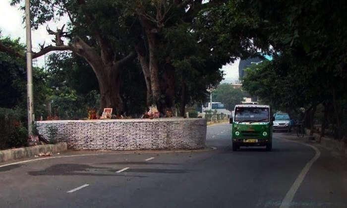 Haunted-Place-in-Delhi-Tree-Near-Dwarka