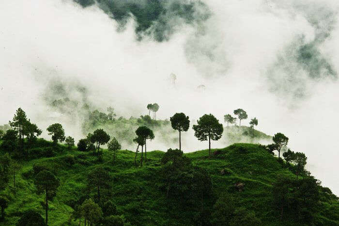 the misty hills of Kasauli, one of the most gorgeous places to visit near Delhi in monsoon