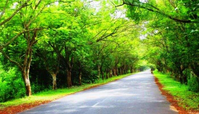 Take a road trip from Konark to Puri on this beautiful road during monsoons.