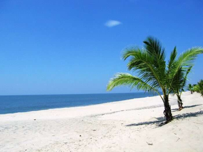 The white sand and palm trees in Marari Beach